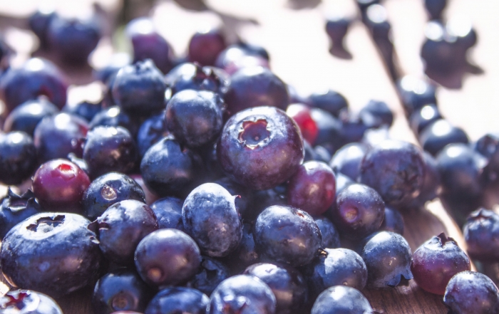 growing, picking, and eating blueberries is a Michigan tradition